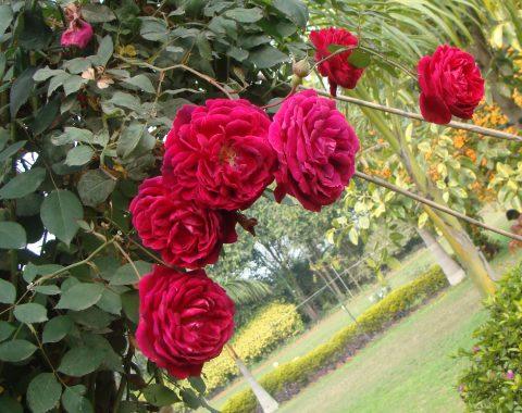 Photo Gallery 1024x684-Flora & Fauna-02